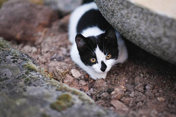 TNR-stray-paws-animal-heaven-01.jpg
