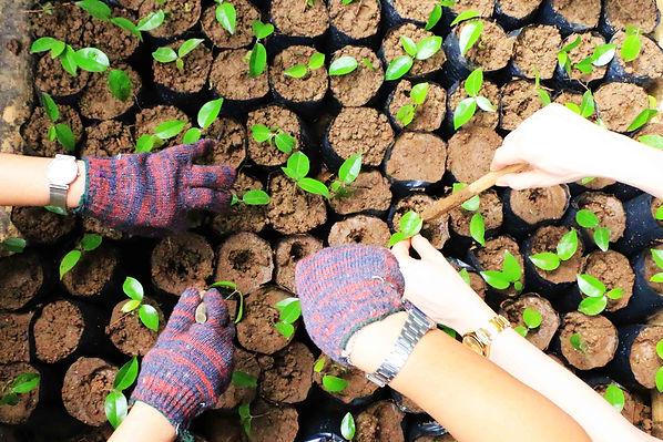 Plant a Tree 3.jpg