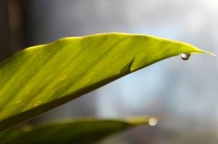 Folhas e Gotas