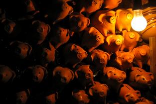 Porquinhos na luz