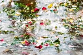 Mistura de Flores Ives Padilha.png