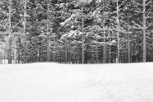 Floresta congelante.png