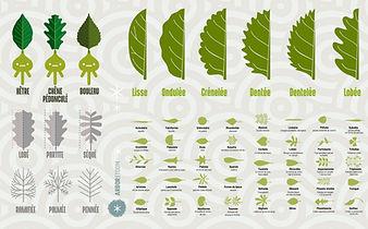 Arboretoom - feuille - forme.jpg