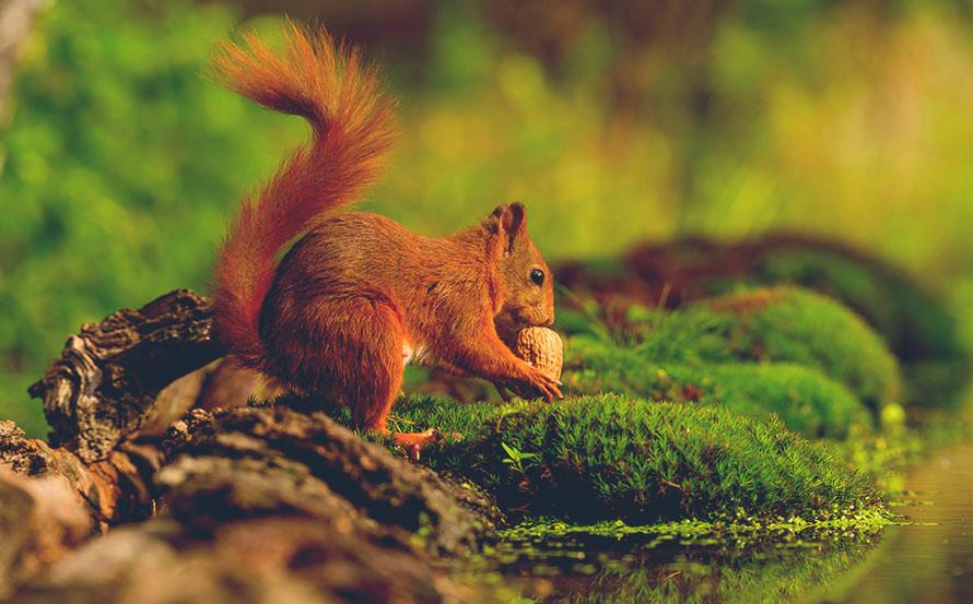 arboretoom-ecureuil.jpg