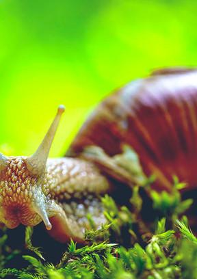 arboretoom-escargot.jpg
