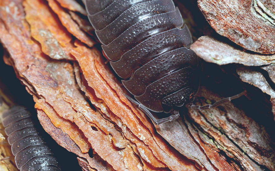 arboretoom-isopodes.jpg