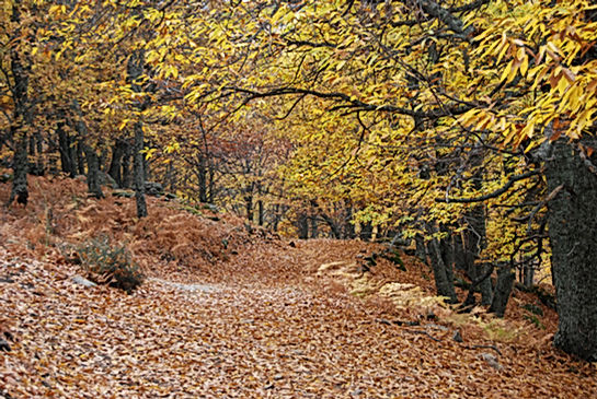 Camino_en_el_Castañar.jpg
