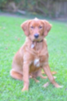 Therapy Dog in Chesapeake VA