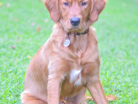 Meet Our Therapy Dog: Tun Baldwin