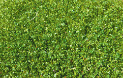 Broccoli sprouts mass-saturate