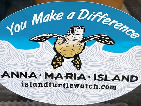 Turtle Nesting Season is in Full Swing on Anna Maria Island