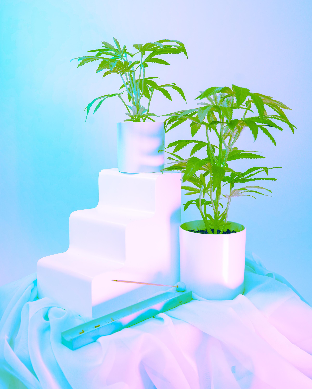potplant-06
