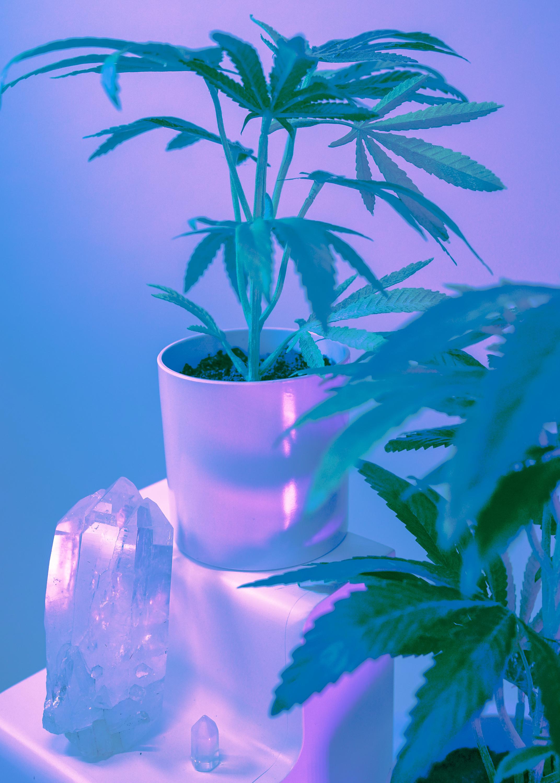 potplant-01