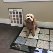 Dog on sample board