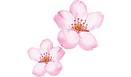 cherry-blossom-clip-art-png-favpng-14j4V