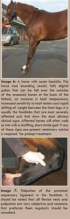 am15_diagnosing_lameness_pg3.jpg