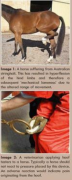am15_diagnosing_lameness_horses.jpg