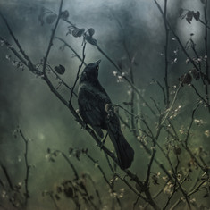 Black Bird Blue l 2.5K.jpg