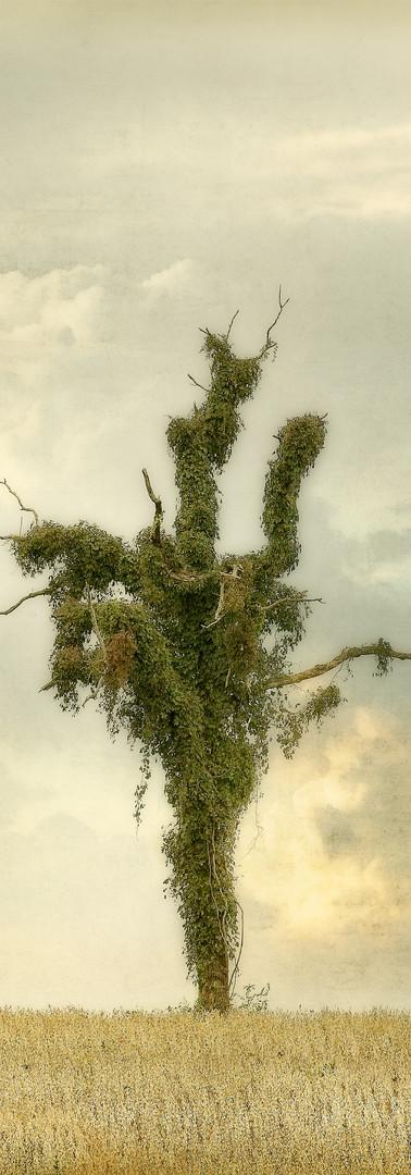 Vine Tree CL.jpg
