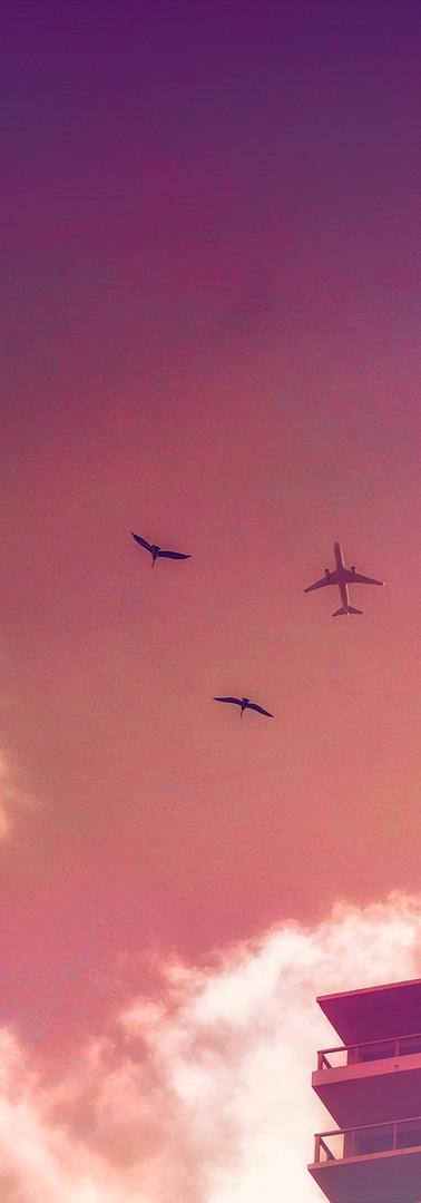2 Birds & A Plane 2K.jpg