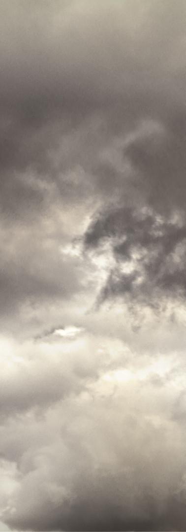 Seagull in a Storm l MMP.jpg