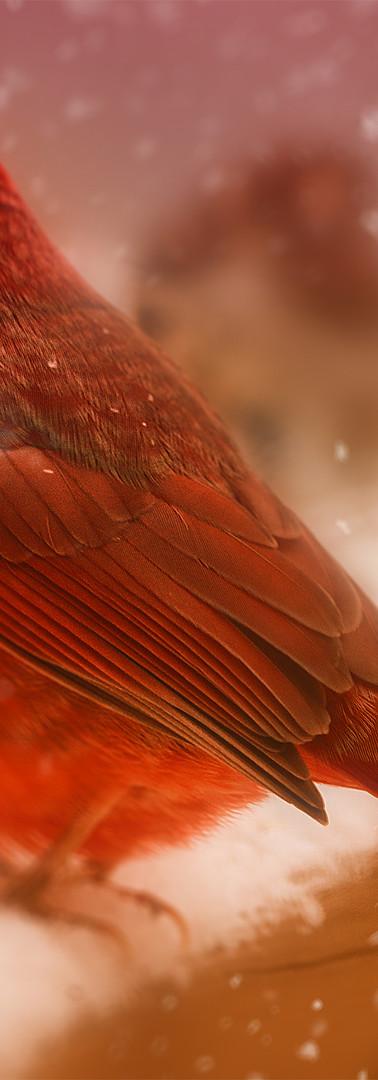 Winter Birds l.jpg