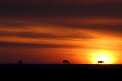 Barrow First Sunrise