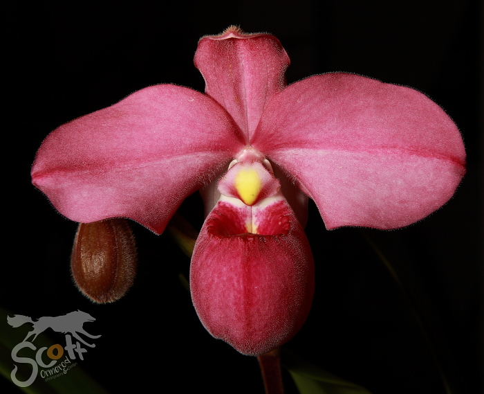 Orchid societyof the Southern Cape