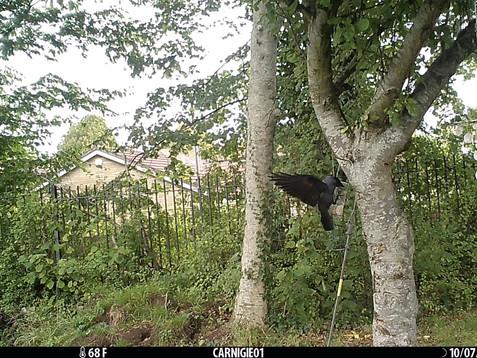 Nature Watch in the Carnegie Garden