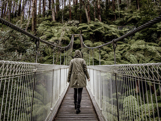 Tarra Bulga National Park | Not a hiker, just (unashamedly) here for the photo op.