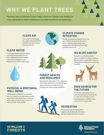 Why we plant trees.JPG
