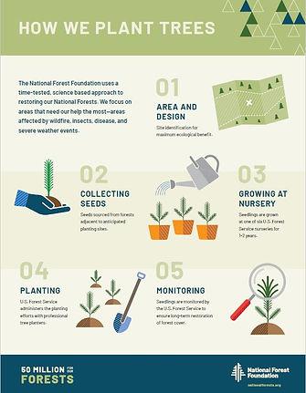 How we Plant Trees.JPG