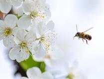 Dove osano le api: un volo verso sostenibilità ed efficienza