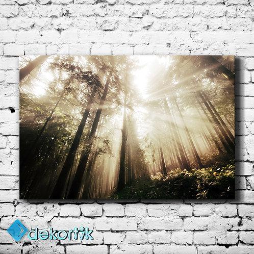 Orman Gün Işığı Kanvas Tablo