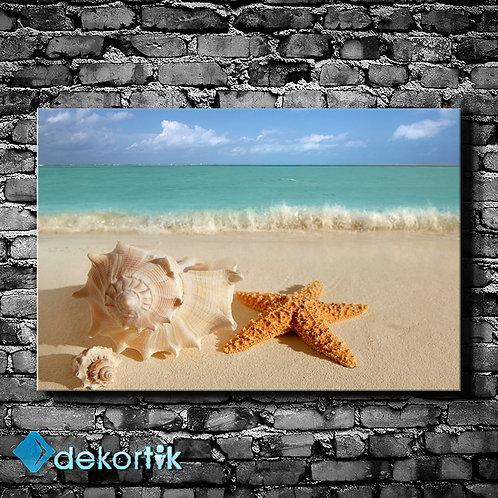Deniz Kabuğu Kanvas Tablo