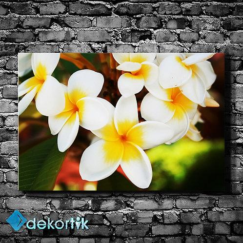 Beyaz Sarı Çiçek Kanvas Tablo