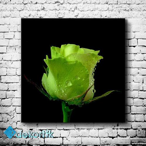 Yeşil Gül Tablo