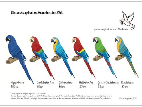 Die sechs grössten Araarten der Welt
