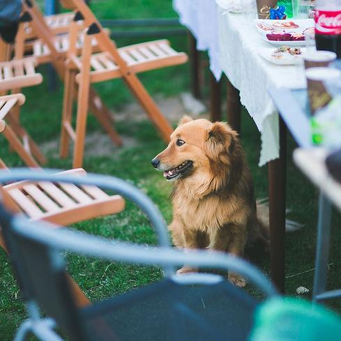 animal-dog-garden-6460.jpg