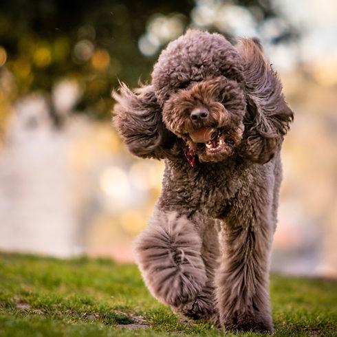 animal-blurred-background-canine-1390762