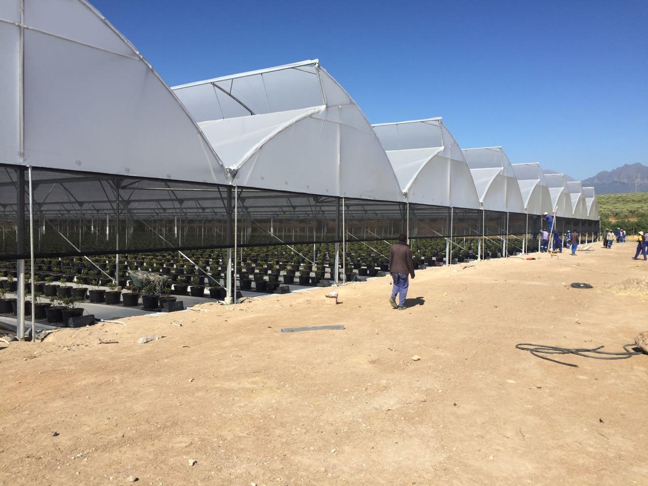 Optigrow Greenhouse
