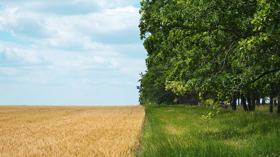 regenerative-agriculture-holistic-management-farmi-ARAVRAU.jpg