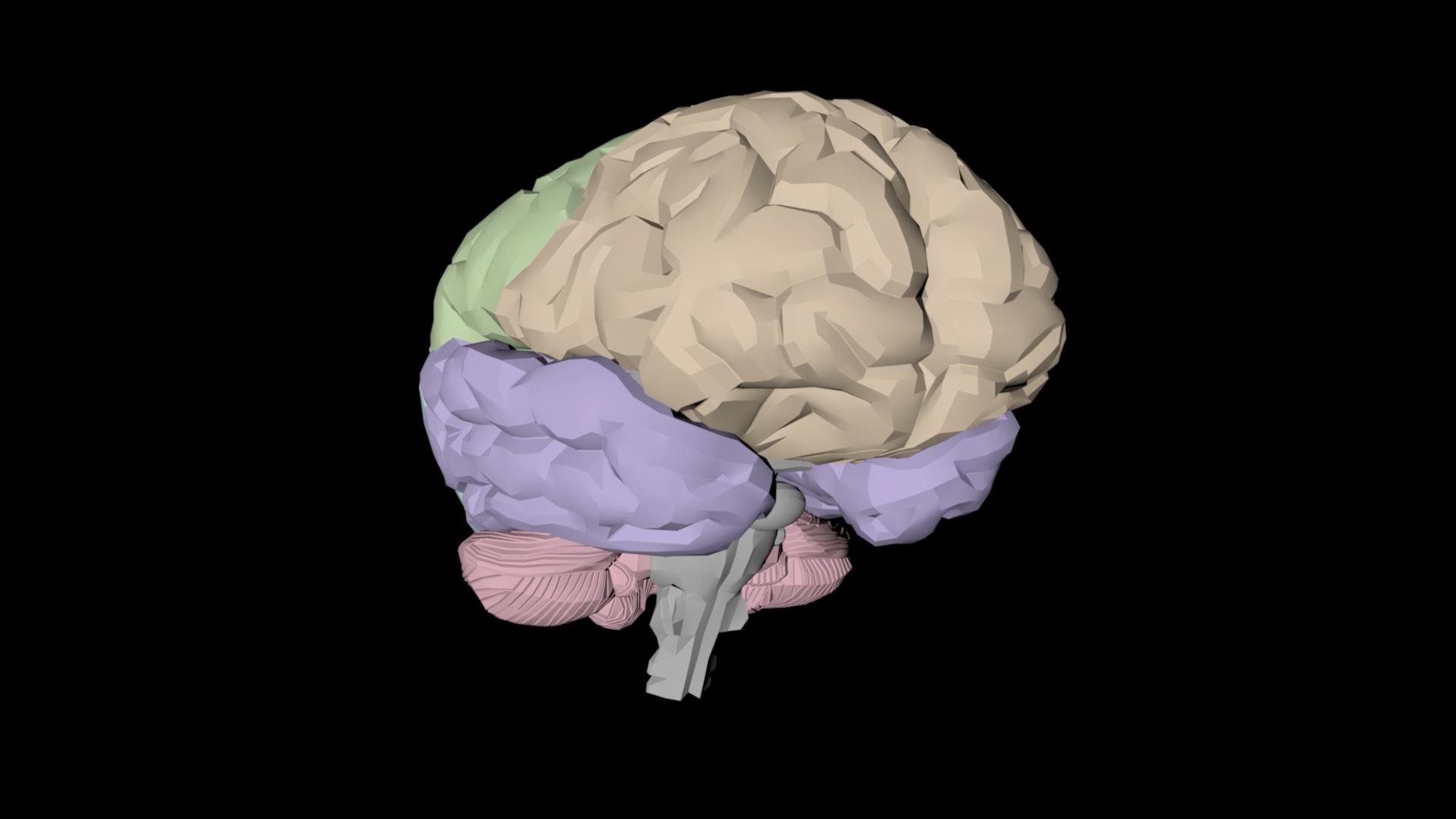 Exploring the Brain_V2_Final_1