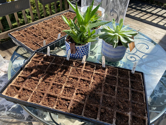 Unpredictable Gardening