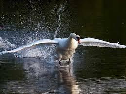 Taking flight...