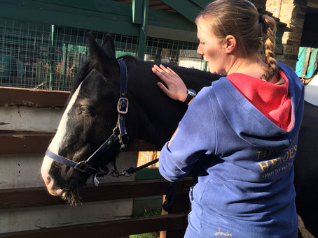Treating the horses and ponies of Vauxhall City Farm