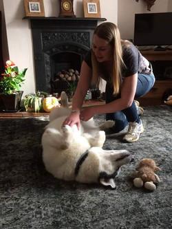 husky massage
