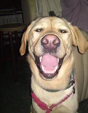 happy pooch