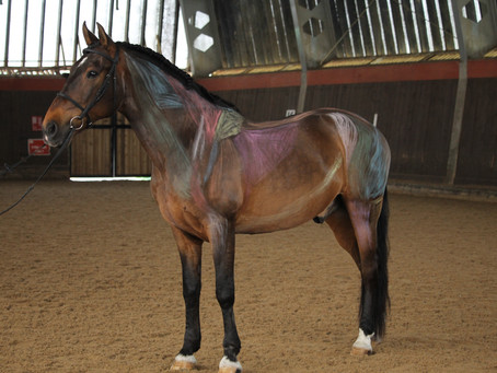 'Painted Horse Demo' by HAC Therapies