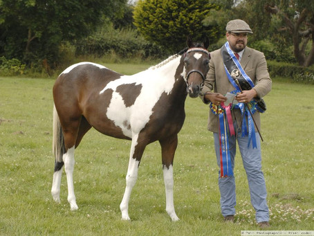 APHS London Counties Show 2019